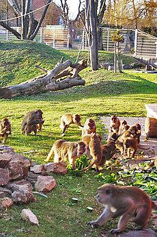Affenfütterung Tierpark Mundenhof Freiburg